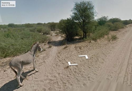 一头驴站长路边