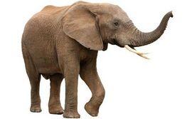 大象在非洲遭到疯狂屠杀