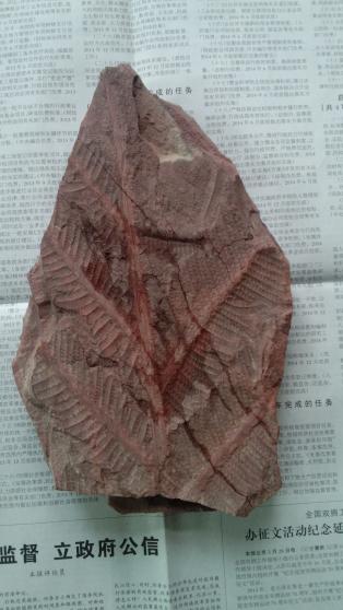 植物化石一枚