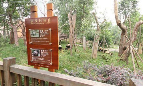 谷歌街景引入四川大熊猫图像