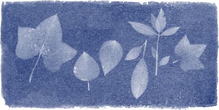 Google Doodle:安娜·阿特金斯诞辰216周年