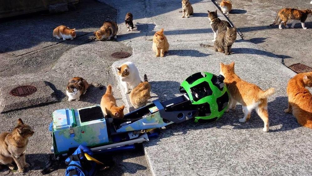 一群流浪猫和谷歌街景车
